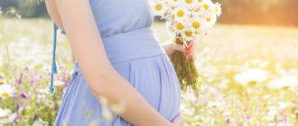 Ромашка пр беременности