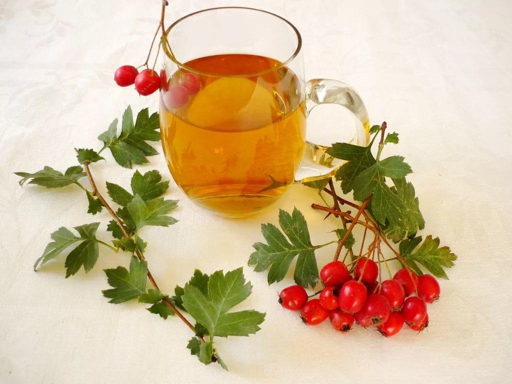 Боярышник — растение, которое обладает массой полезных свойств