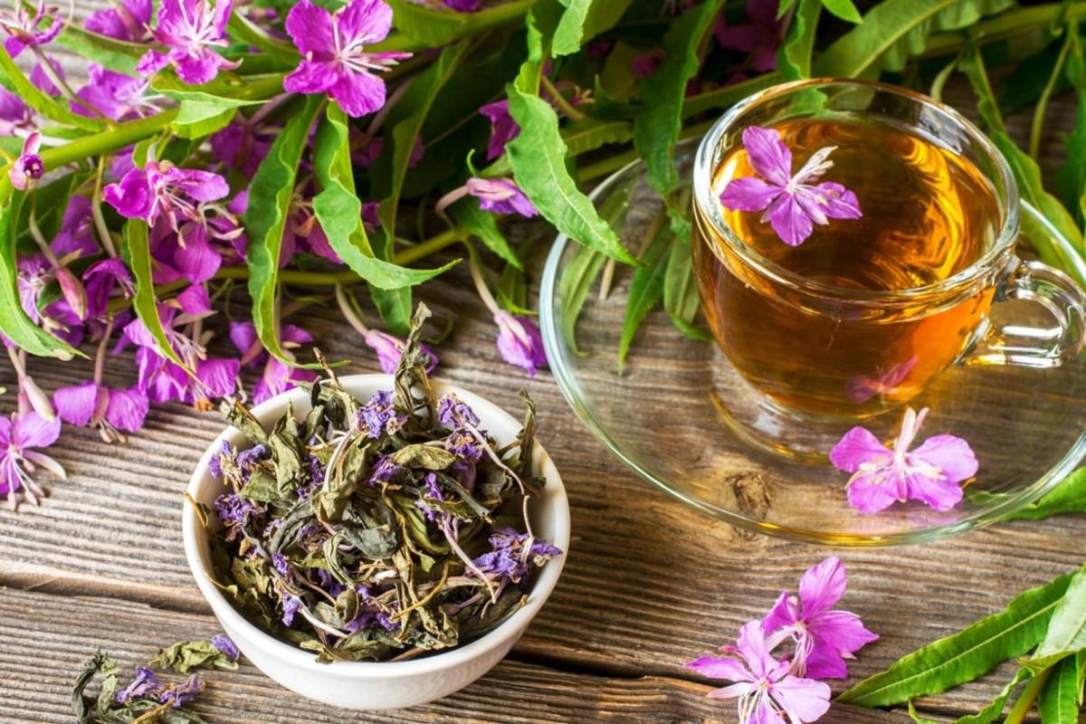 Чай, приготовленный из иван травы и калины, будет обладать колоссальными лечебными свойствами