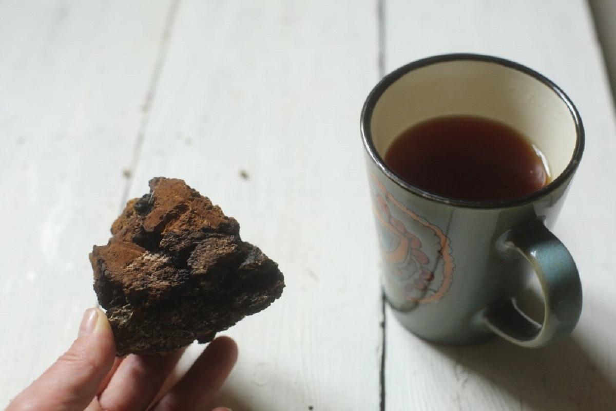 Чай из чаги березовой: полезные свойства и противопоказания, как заваривать и пить, 7 рецептов