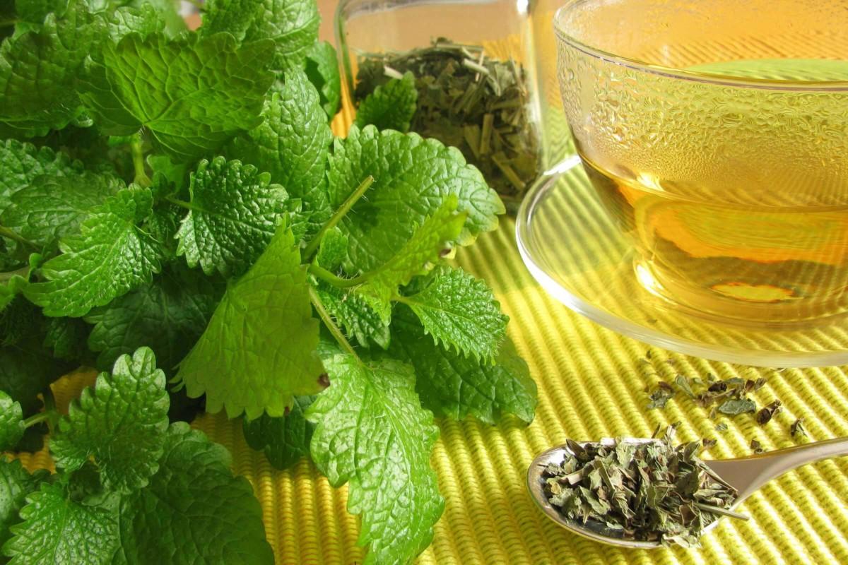 Чай с фенхелем и мелиссой рекомендуют пить при хронических стрессах