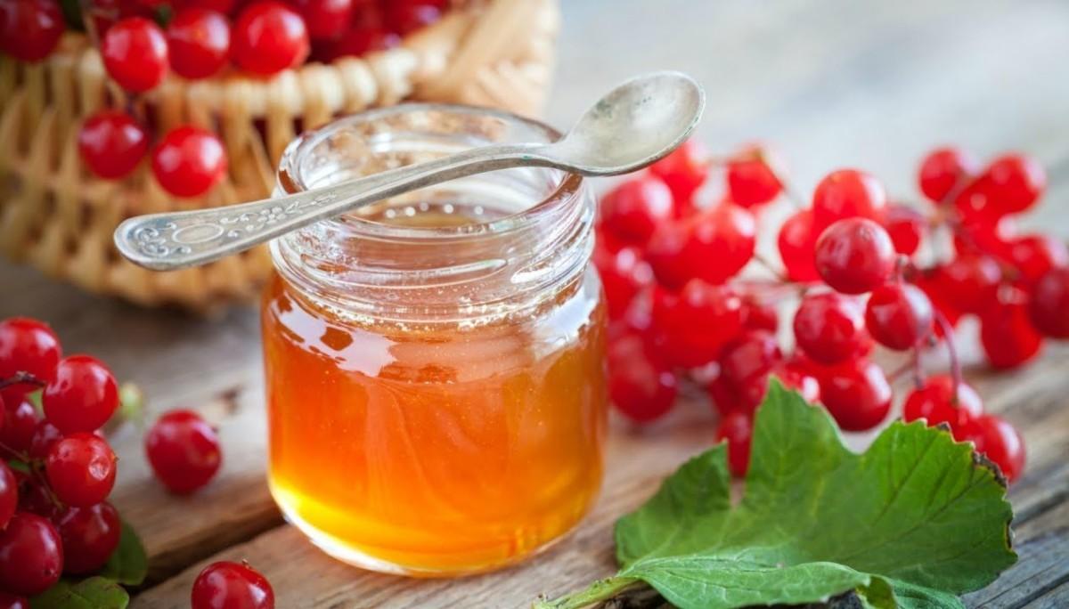 Калина с медом, приготовленная по традиционным рецептам, способна заменить некоторые дорогие препараты из аптеки