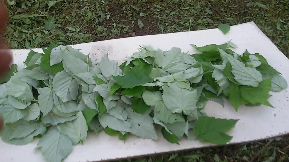 Сушка листьев