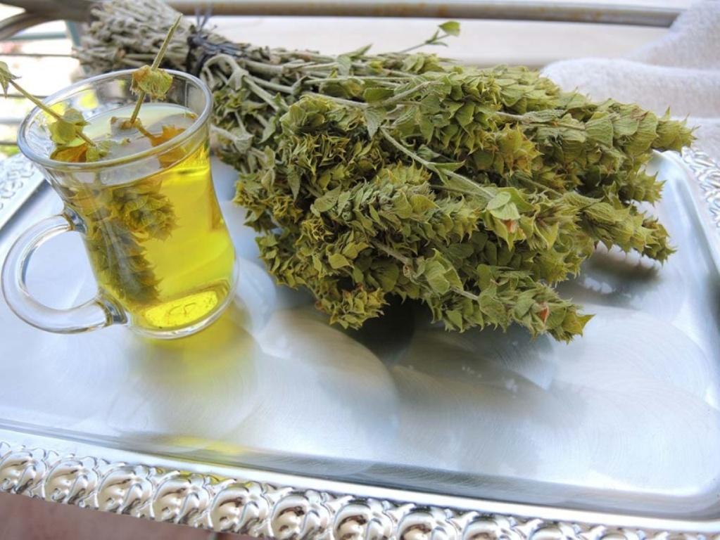 Мурсальский чай способствует очищению крови