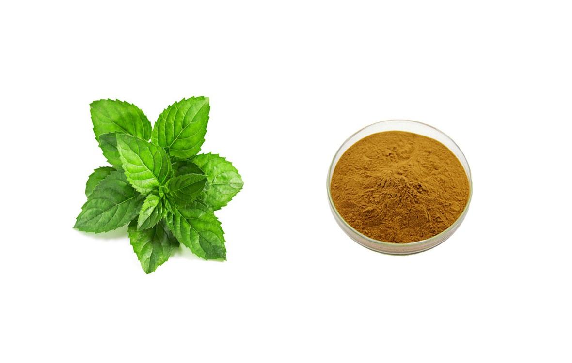 Мятный чай - незаменимое лекарство для гипертоников